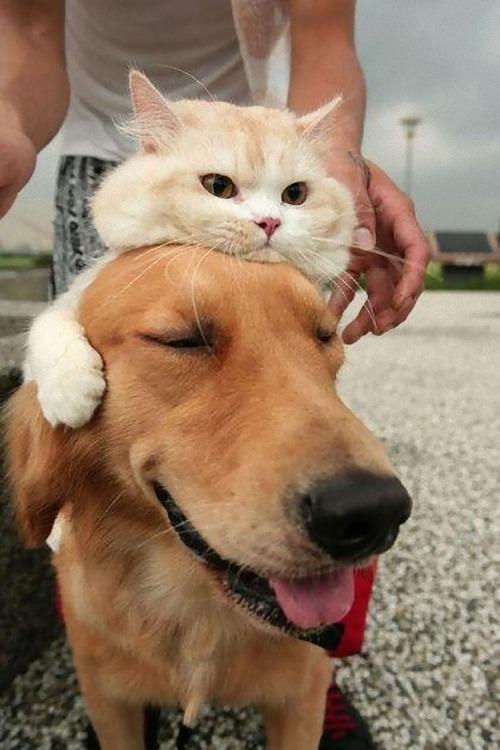 猫をかぶる犬たち05