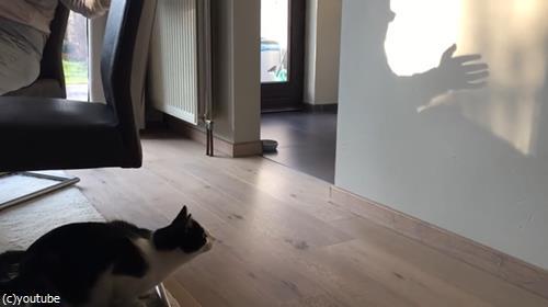 猫VS影絵02