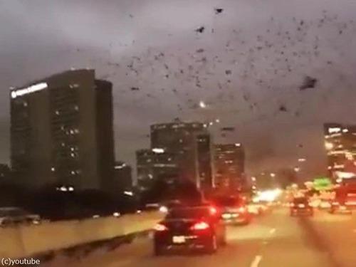 テキサス州の鳥は「この世の終わり」01