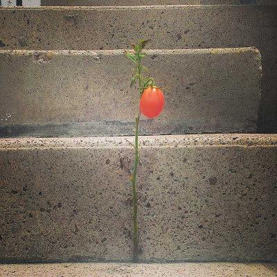 10生命力のる植物たち