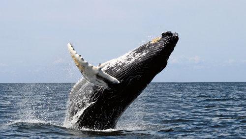 孤独なクジラ「52」01