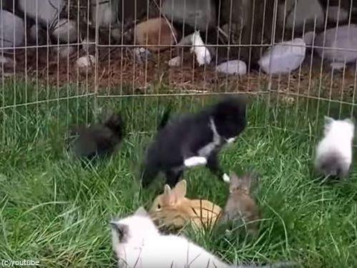 子猫と子ウサギ01