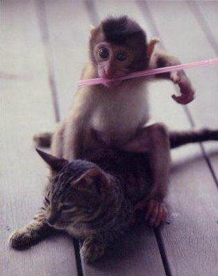 猿と猫の仲02