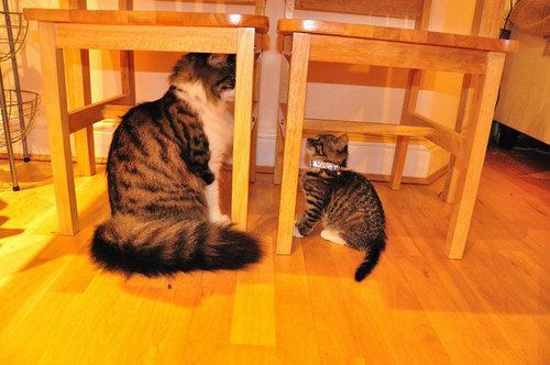 育ちすぎた猫たち09