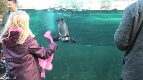 ペンギンを手懐ける女の子02
