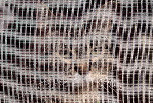 網戸と猫03