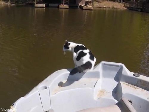 泳ぐのが速い猫00