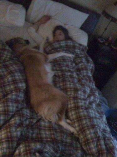 犬と一緒に寝ると02