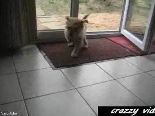 肉球をキレイキレイする犬02