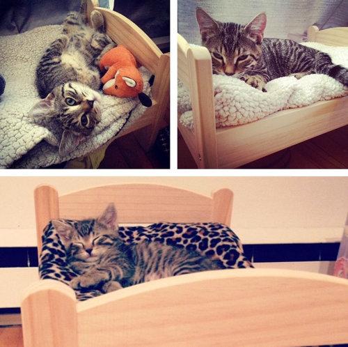 猫ベッド12