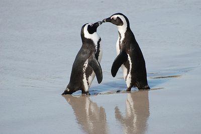 ペンギン01