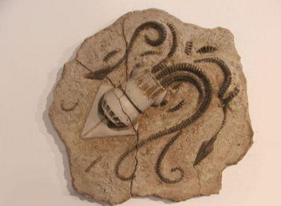 未来の化石09