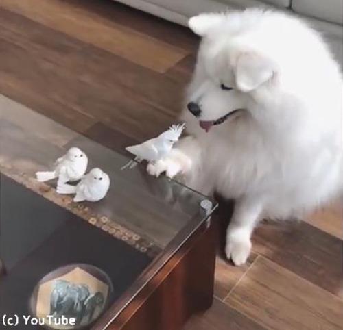「う、動けない」…鳥に困ってるワンコがかわいい02