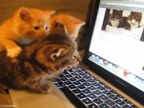猫動画を見た子猫たち05