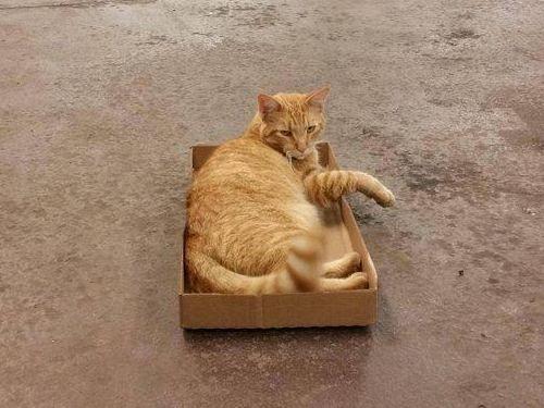 猫とトラップ02