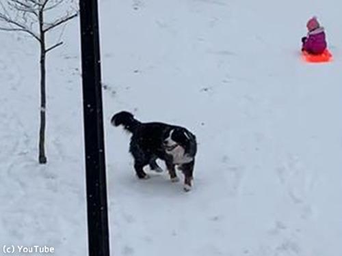 雪を愛してやまないワンちゃん00