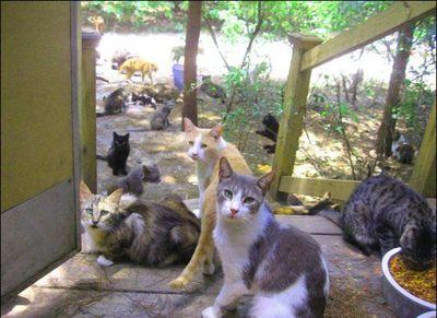 猫の王国13