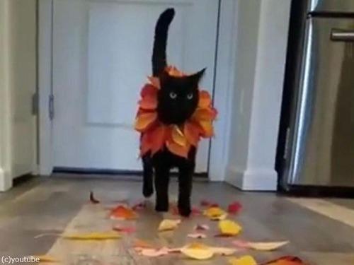 猫のファッションショー04