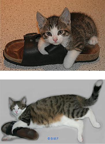成長した猫12