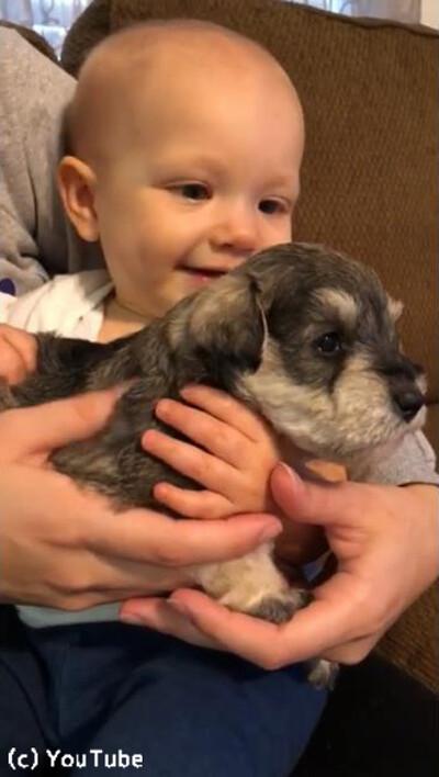 泣いてる赤ゃんに子犬を抱かせたら…こんなに表情が明るくなった!04