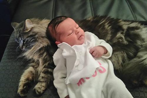 女の子を守る猫04