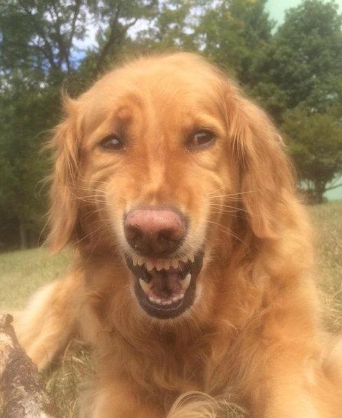 世界で最も感動の薄い犬08