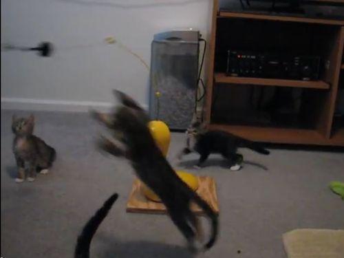 思うままに釣られる子猫たち03