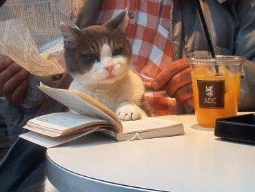 とても賢そうなインテリ猫たち01