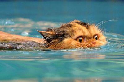 泳ぐ猫05