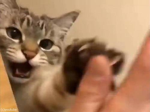 ハイタッチする猫04