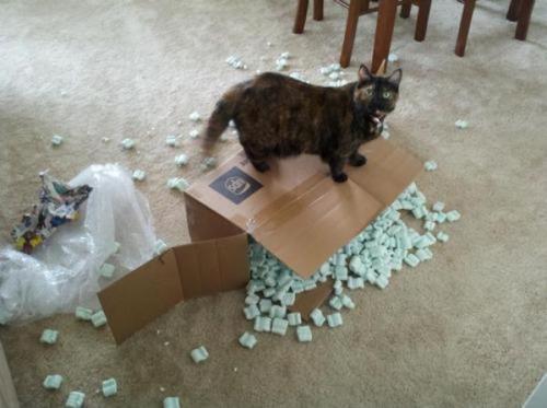 猫の恐怖06