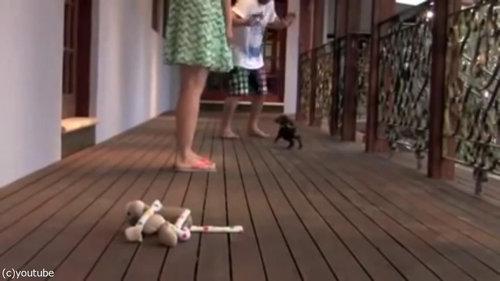 レディを守る小さな子犬05