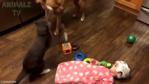 赤ちゃんに蹴られた猫、犬に八つ当たり05