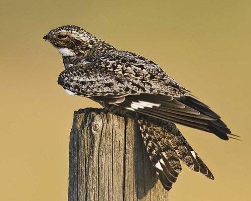 鳥に見えるクチバシ06