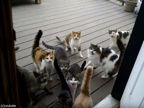 猫の大合唱02