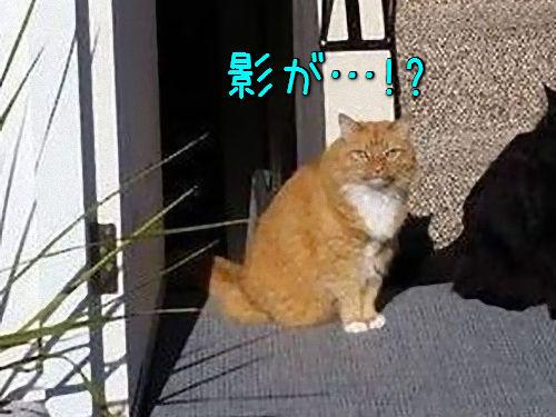 「この猫の名前はシャドーにしたほうがいい」00