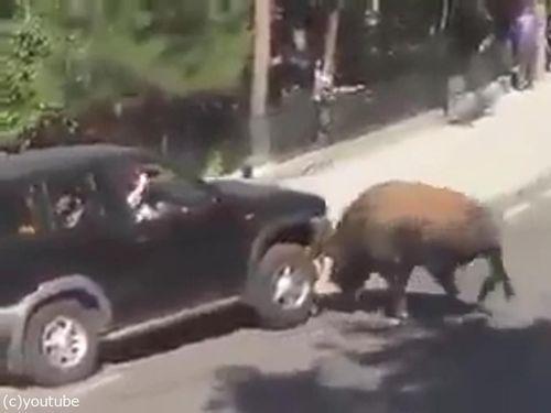 駐車と猛牛01