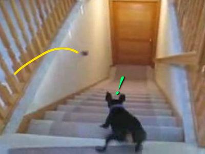 犬の階段の降り方