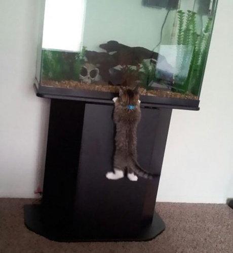 チャレンジャーな猫08