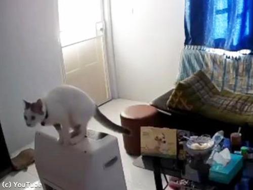 猫のジャンプが招いた悲劇00