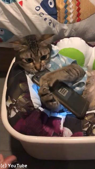 特等席でくつろぐ猫ちゃん05