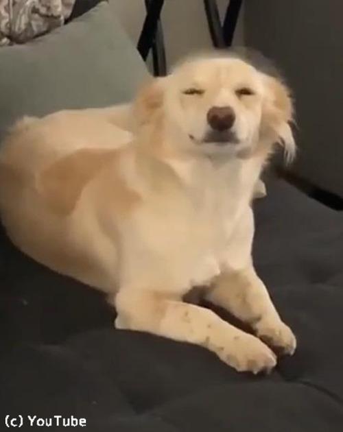 飼い主さんの帰宅を笑顔で出迎える犬03