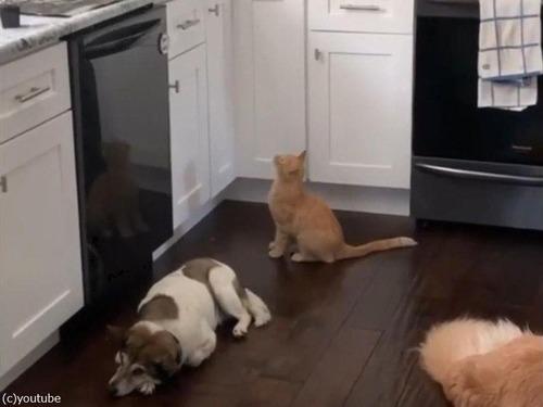 「猫がキッチンカウンターの上に乗らないようにする方法」00