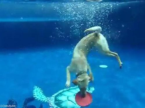 フリスビー犬03