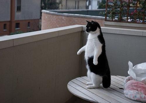 ペンギン猫05