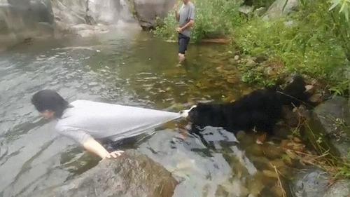 泳がせてくれない犬02