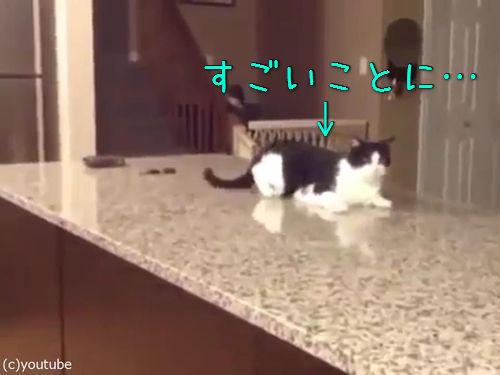 「この猫に…何が起きてるの!」00