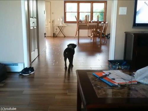 マイペースな犬のボール遊び03