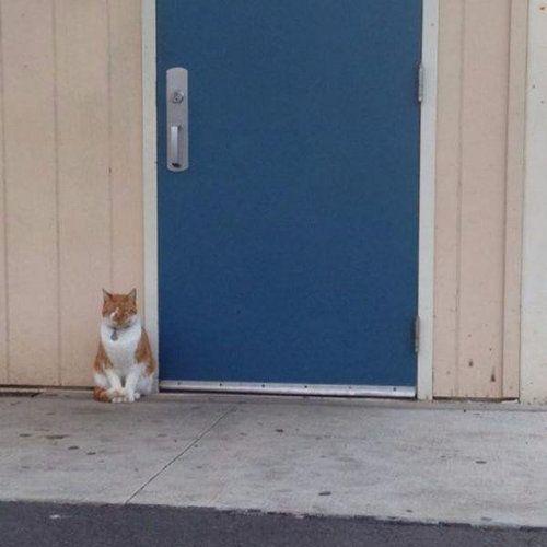 毎日高校に通う猫01