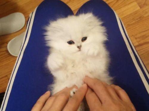 白猫をこちょこちょ01